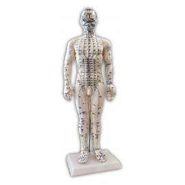 Mannequin d'acupuncture 50cm